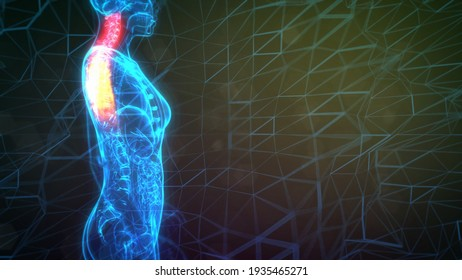 Cervical, top part of human spine on xray body, cg medicine 3d illustration