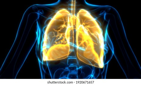 cg medical 3d illustration, orange lungs on x ray image
