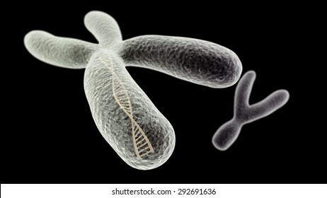 CGI visualization of the X chromosome with DNA helix inside and Y (electronic microscope simulation) with focus effect (black version)