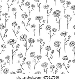 Chamomile drawing seamless pattern. Isolated daisy wild flower and leaves background. Herbal engraved style illustration. Detailed botanical sketch for tea, organic cosmetic, medicine,