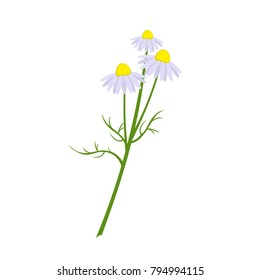Chamomile drug in the style of flat. Isolated on a white background.