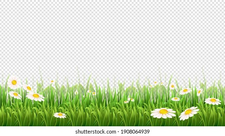Chamomile field. Green grass, flowers and herbs border. Natural park or meadow isolated on background. Blossom lawn banner