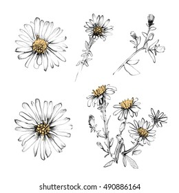Chamomile flower isolated set. Realistic hand drawn flowers background. White and black pencil botanical art illustration. Vintage design for sketchbook, greeting card, postcard, invitation, fabric.