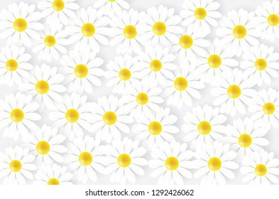 Chamomile flowers. Chamomile background. Daisy chamomile spring summer field flowers pattern.