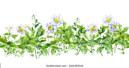 Chamomile flowers, green grass. Seamless border with medical plants. Watercolor