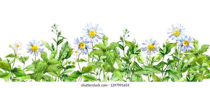 Chamomile flowers, green grass. Seamless border with medical camomile plants. Watercolor