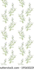 Chamomile. Hand drawing sketch on white background