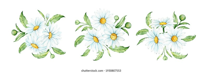 Chamomile leaves. Watercolor drawing, on an isolated background. Set, bouquets, vintage style.