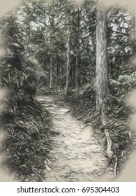 Charcoal Drawing; Trail at the World Heritage Forest Kumano Kodo, Wakayama Prefecture, Japan, May, 2012