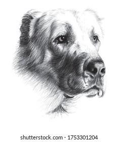 charcoal illustration dog drawing illustration