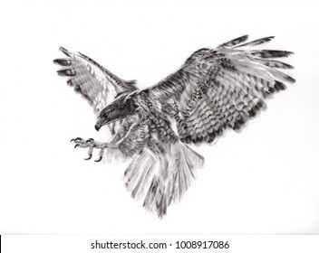 Charcoal painting of hawk on paper
