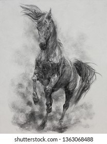charcoal painting of Horse on canvas , Draw animals , Beautiful portrait , realistic , emotions