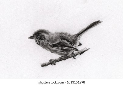 Charcoal painting of ?bird on paper , Draw animals , Beautiful portrait , realistic