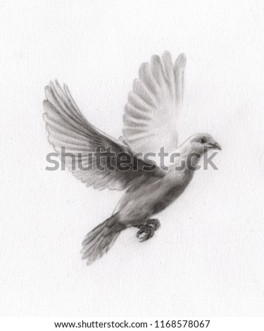 Charcoal Painting Pigeon On Paper Draw Stock Illustration 1168578067