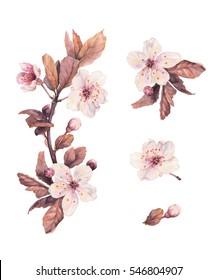 Cherry blosoom. Watercolor set