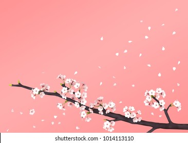 Cherry Blossom  background, 3D illustration