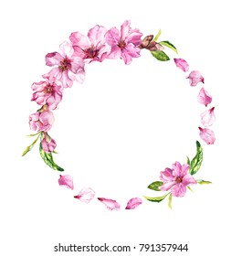 Cherry blossom, spring flowers (sakura). Floral wreath with petals. Watercolor circle frame