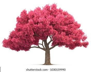 cherry blossom tree isolated 3D illustration