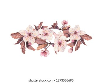 Cherry blossom. Watercolor design element isolated on white background. Floral composition with blooming branch for wedding, invitations, birthday, baby cards, greeting cards.