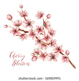Cherry blossom, watercolor illustration,spring flowers, flowers,card for you,handmade,different elements
