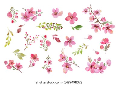 Cherry blossom watercolour clip art. Twigs, brunches, blossoms, leaves. Isolated