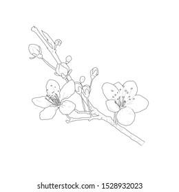 cherry blossoms, black and white sketches, white background