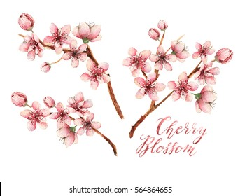 Cherry blossom,spring flowers,watercolor illustration,branches, flowers,handmade,different elements