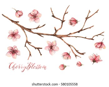 Cherry blossom,Watercolor spring illustration,card for you,handmade,different elements, twigs, buds, flowers