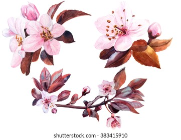 cherry flower watercolor set