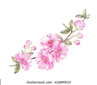 Cherry flowers blooming bouquet. Watercolor greeting card. Vintage sakura bouquet with pink blooming bud of cherry. Floral botanical illustration.