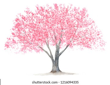 A Cherry  tree watercolor illustration.