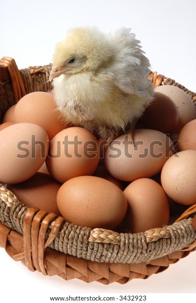 chick near eggs
