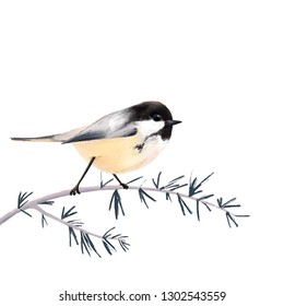 Chickadee bird sitting on the branch digital painting illustration isolated on white background