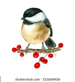 Chickadee Bird Tit watercolor painting hand drawn isolated on white background