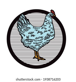 Chicken. Hand-drawn sketch in a graphic style. illustration for poster, web isolated on white background