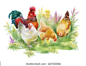Chicken and rooster in the grass on white background