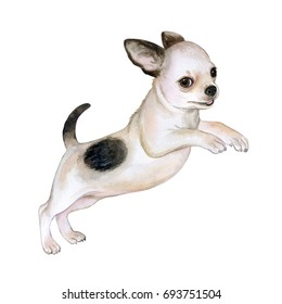 Chihuahua dog isolated on white background. Funny puppy. Hand painted cute domestic pet. Watercolor close-up portrait. Illustration. Clip-Art