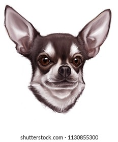 Chihuahua dog portrait. Hand drawn digital illustration of a dog. T-shirt design.