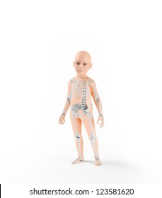 Children anatomy with visible skeleton
