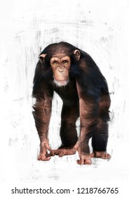 CHIMPANZEE SKETCH / OIL COLOR PAINTING