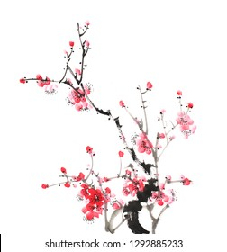 Chinese painting of flowers, plum blossom on white background.