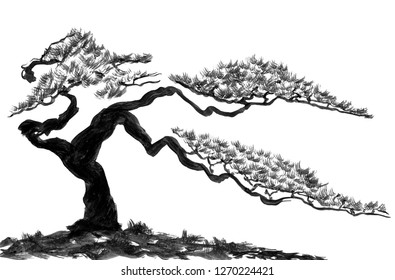 Chinese pine.  Watercolor and ink illustration in style sumi-e, u-sin. Oriental traditional painting.  Isolated on the white background.