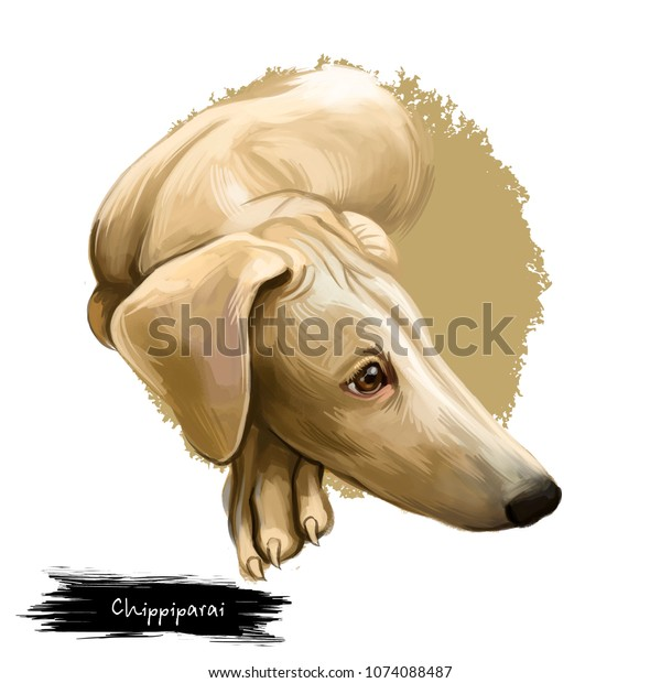 Chippiparai Dog Breed Isolated On White Stock Illustration