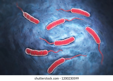 Cholerae bacteria which causes cholera. 3D illustration