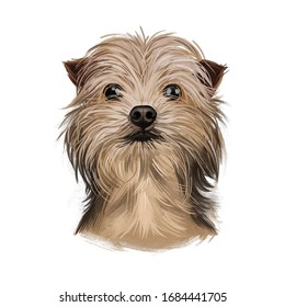 Yorkie Coloring Pages | AKC Yorkshire Terrier-standing | Yorkshire ... | 280x260