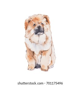 Chow Chow. Dog set . Watercolor painting isolated on white background.
