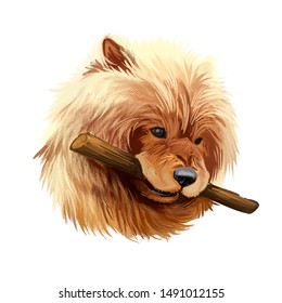 Chow puppy tang quan Chinese breed dog with wooden stick in teeth. Playful domestic toy pet chowdren mammal purebred watercolor portrait isolated on white background digital art illustration