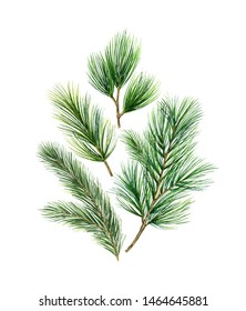 Christmas card with green fir branches isolated on white background.Illustration for greeting cards, banners, invitations, calendars.