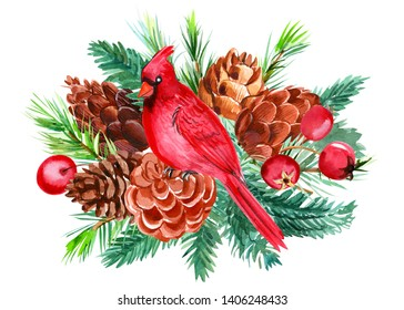 Christmas composition on white isolated background, bird red cardinal, fir and pine branch, pine cones, hawthorn berries, watercolor illustration