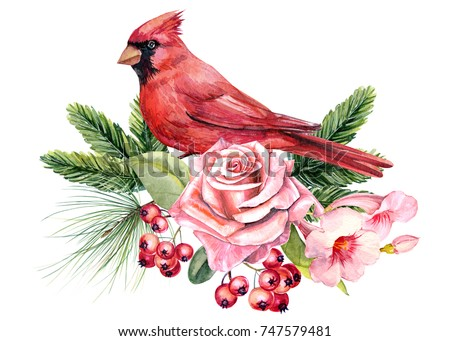 christmas decorations bird red cardinal rose hibiscus and berries spruce branches